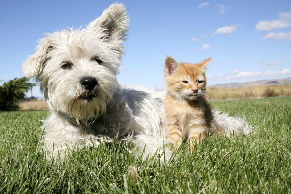 Toma en cuenta que ellos requieren mayor atención que otras mascotas. Al...