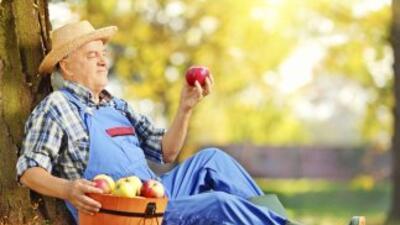 Un estudio muestra que los que consumen habitualmente manzanas, la fruta...