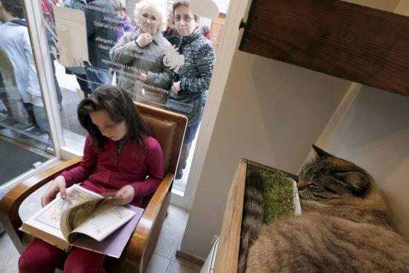 También puedes llevar a tu gatito y recostarlo en un cómodo lugar durant...