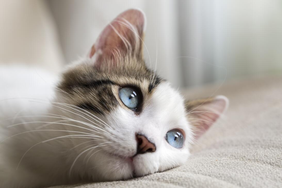 Los gatos, nuestros guardianes protectores