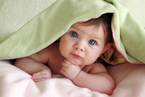 Investigaciones demuestran que durante los primeros meses de vida hay se...
