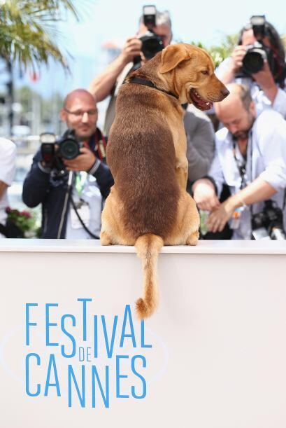 La película hace conciencia para los millones de perros que son abandona...