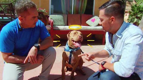 Luis Sandoval llevó a su fiel Maclovio a la escuela de perros del mismís...
