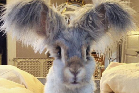 Se trata de un conejo bastante inusual.
