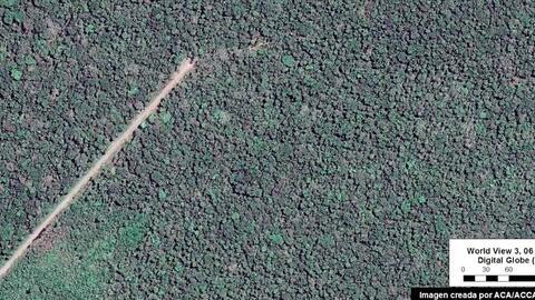 Imágenes satelitales tomadas en agosto revelan el avance de la ca...