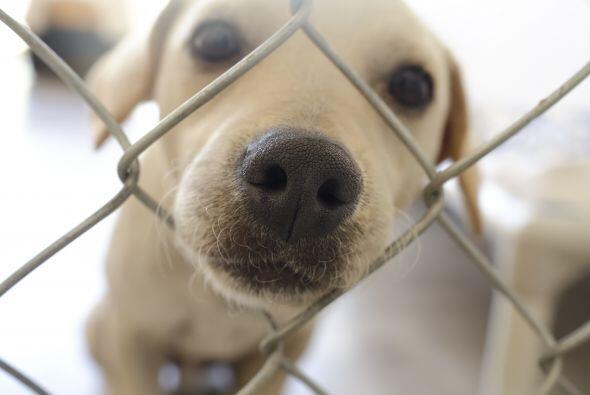 Adoptar. Adquirir un perrito de un refugio o grupo de rescate es una de...