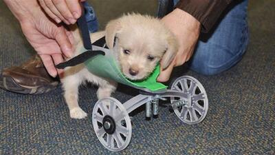 La tecnología ayuda a este cachorro a dar sus primeros pasos