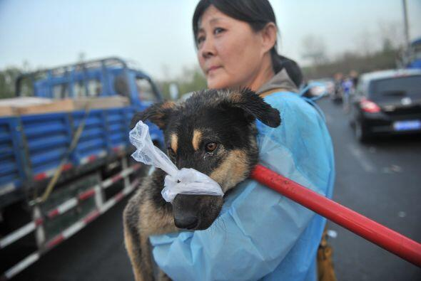 Los voluntarios de la asociación atendieron a los animales, puesto que a...