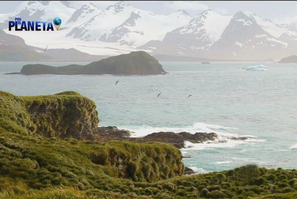 Muy cerca de ahí, en la Isla Prion, viven los Albatros.