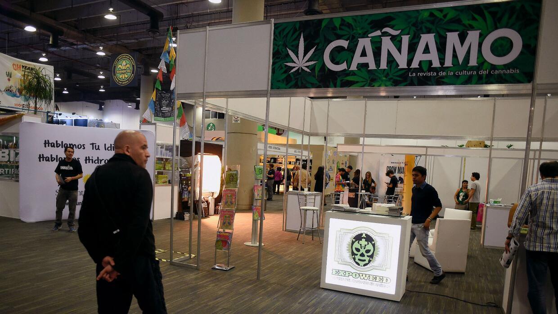 Expoweed, la feria en México sobre los usos medicinales y terapéuticos d...
