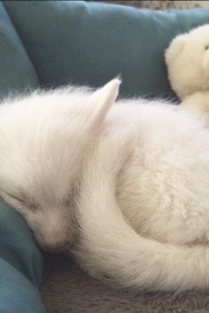 Dado que es apenas un cachorro, le encanta dormir.