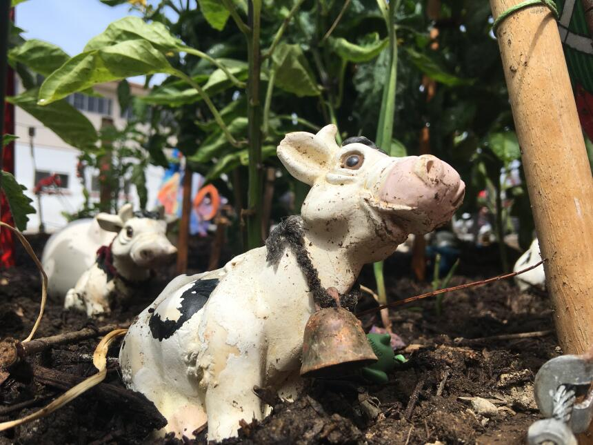 Las vacas y animales hacen ver al huerto como un ranchito.