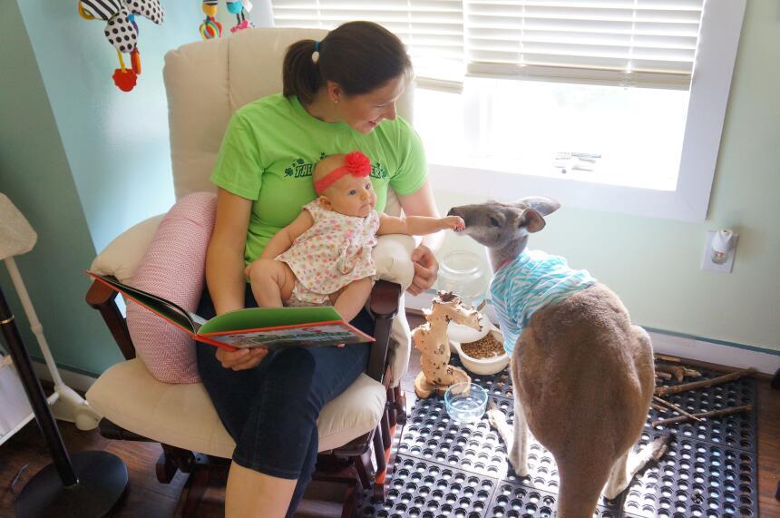 Canguro es hermanito de bebé