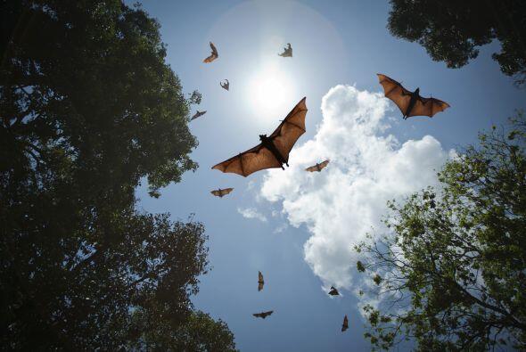 En el caso de murciélagos presagia peligros. Los terrestres si son carní...