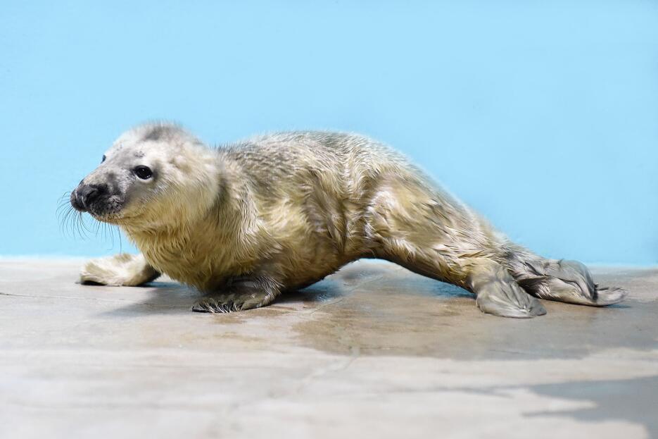 Nace bebé foca en el zoológico Brookfield
