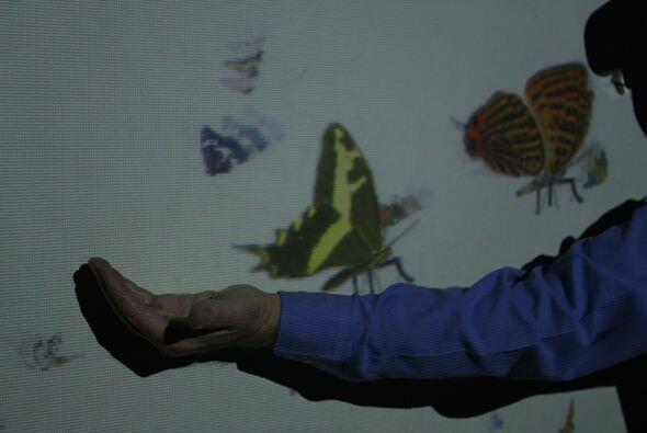 También tienes la posibilidad de perseguir a las mariposas y si les pone...