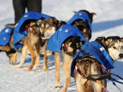 Perros miran hacia atrás después de su llegada al centro d...