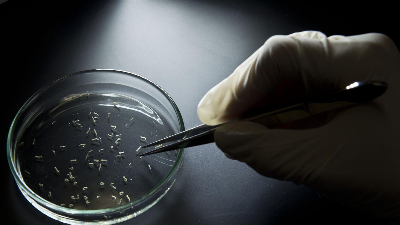 ¿Por qué el virus del Zika esquivará a Canadá y Chile? zika.jpg
