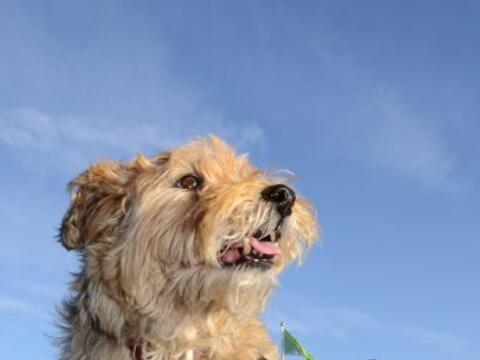 Chester es un perrito de 12 años, que después de una cirug...