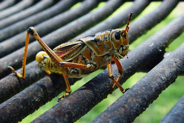 Mantén lejos a los insectos. Para ello, la revista The Family Handyman i...
