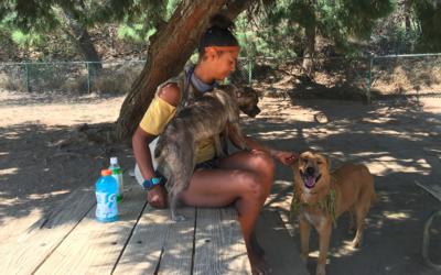 Amber Freeman, una paseadora de perros de Los Ángeles, haciendo s...