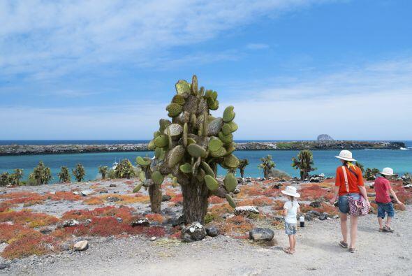 12. Islas Galápagos, Ecuador. Los animales aquí no le tienen nada de mie...