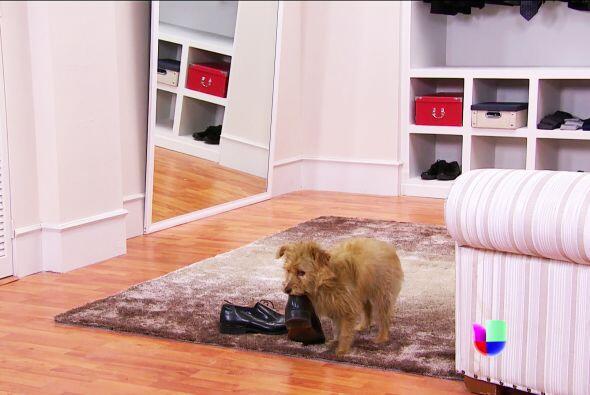 ¡No Siete! Estás arruinando los zapatos de Fernando.