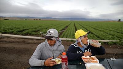 En fotos: trabajadores agrícolas con visa H-2A, el programa que desea mejorar Donald Trump