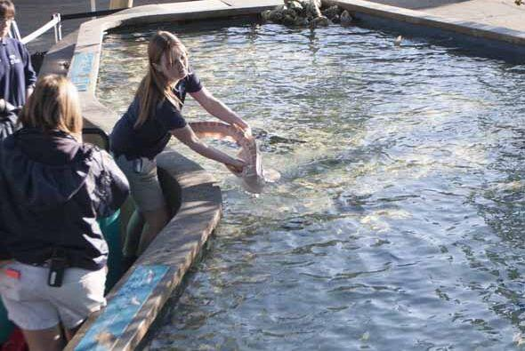 Fotos exclusivas de los bebés tiburón zebra que nacieron por inseminació...