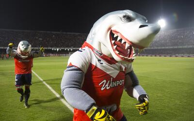 Veracruz tiburón