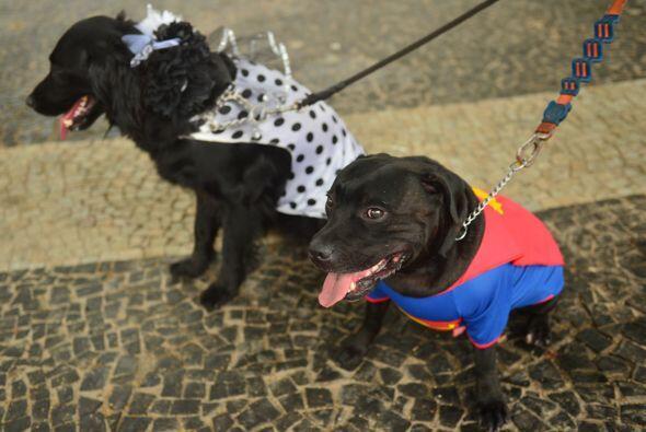 Pero él no fue el único superhéroe perro ya que ese fue uno de los disfr...