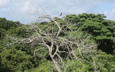 Este es el bosque tropical húmedo en San Lorenzo, Panamá,...