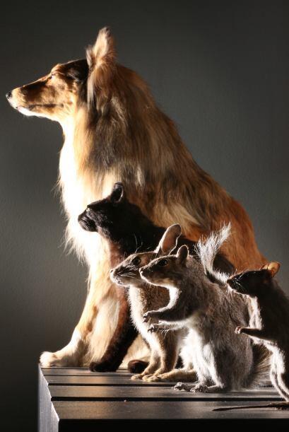Estas especies de animales son tan inteligentes que podrían ense&...