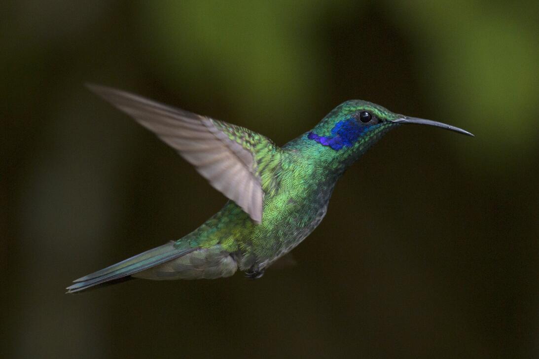 La razón por la que las aves no tienen canas y otros 14 secretos de su p...