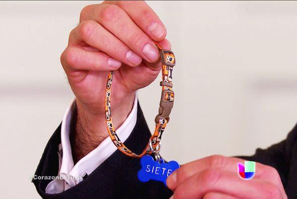 Y le tiene un gran regalo. ¡Un collar con su nombre para que no se pierda!