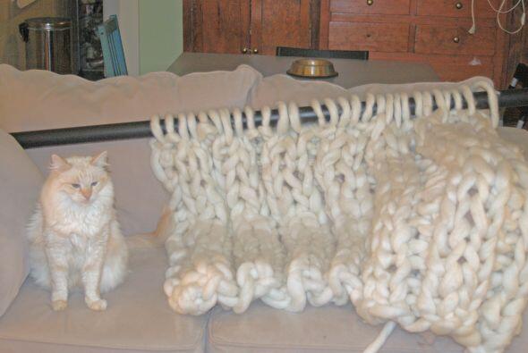 Hasta el pequeño minino de Laura disfruta de sus sorprendentes tejidos.