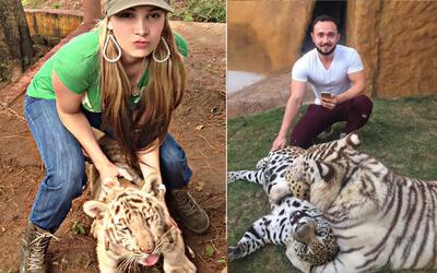 Los verdaderos tigres del regional mexicano no vienen del norte: mira la...