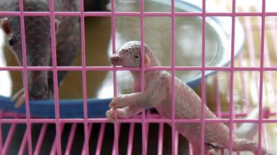 Retratos de crueldad: el tráfico animal en el planeta