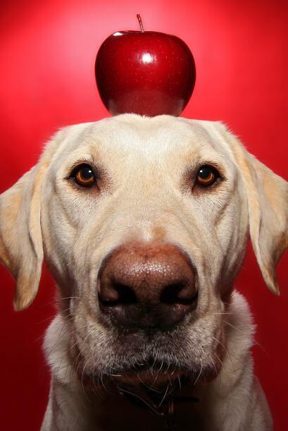 Con la manzana en la cabeza, ¿no te recuerda a las escenas en las pelícu...