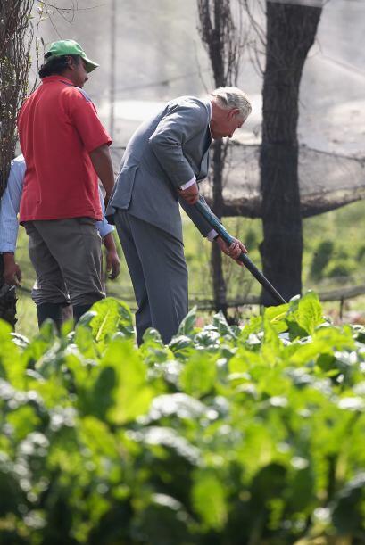 Y ahí, el príncipe de Gales ayudó un poquito a remover la tierra. Un poq...