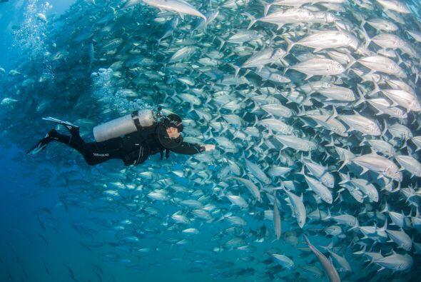 Caine aseguró que es el banco de peces más grande que ha presenciado a p...