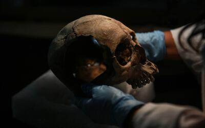 Un antropólogo examina cráneos encontrados en un sitio cer...