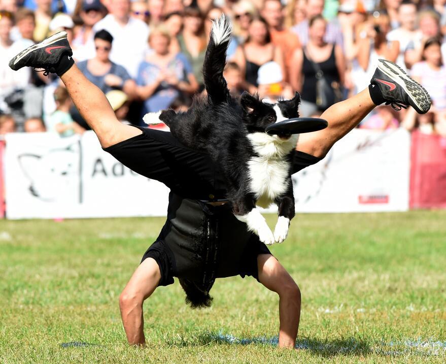 Paco Lobo y su perro Cleo juegan al frisbee en una competición en Poloni...
