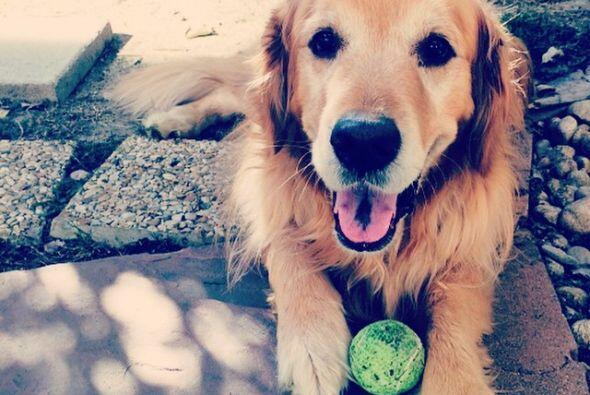 Augie A todos los perros les gustan las pelotas, pero a ninguno tanto co...