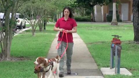 Esta detective de mascotas ayuda a los dueños a encontrar animales perdidos