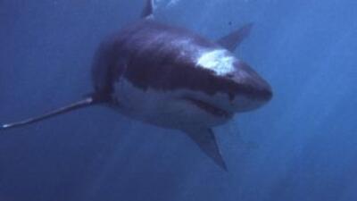 Ataque de tiburones