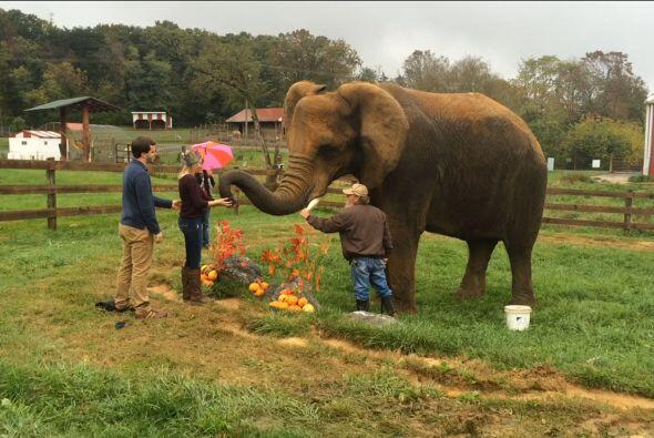 Pero Ian no tenía el anillo en sus manos, fue el elefante él que le entr...