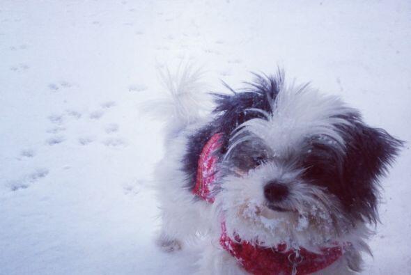 Bello perrito navideño. Gracias por compartir sus fotos
