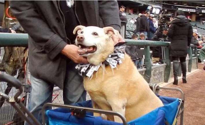 Los fans de los White Sox pudieron llevar a sus mascotas al estadio