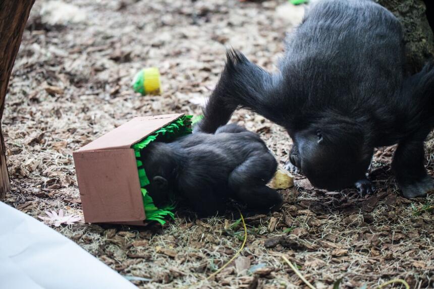 Gran fiesta de cumpleaños en el zoológico Lincoln Park